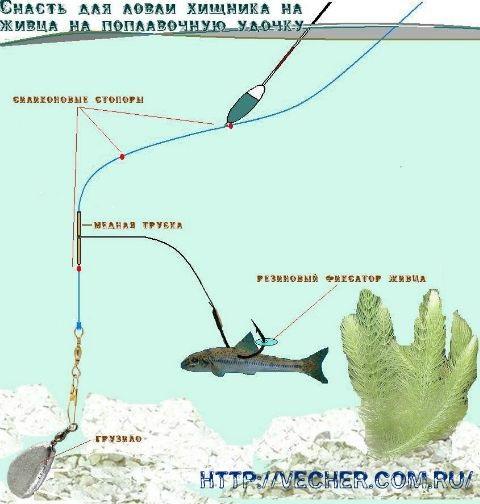 как ловить рыбу весной руками